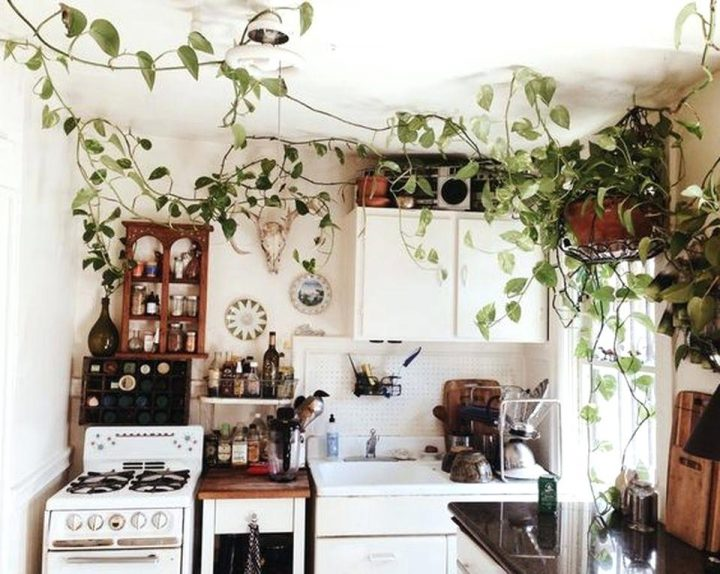 A Green Climbing Plant With Vines Spanning the Whole Kitchen Area to Create a Sense of the Outdoors
