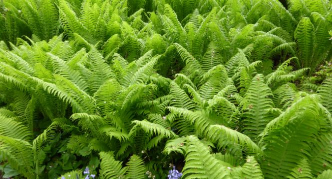 Large Group of Ferns