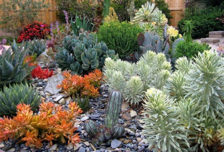 Mix and Match Cacti