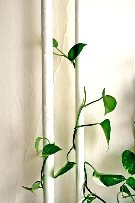 Plant Climbing an Exposed Pipe