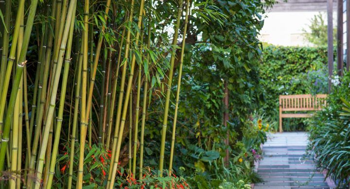 Bamboo Shrub