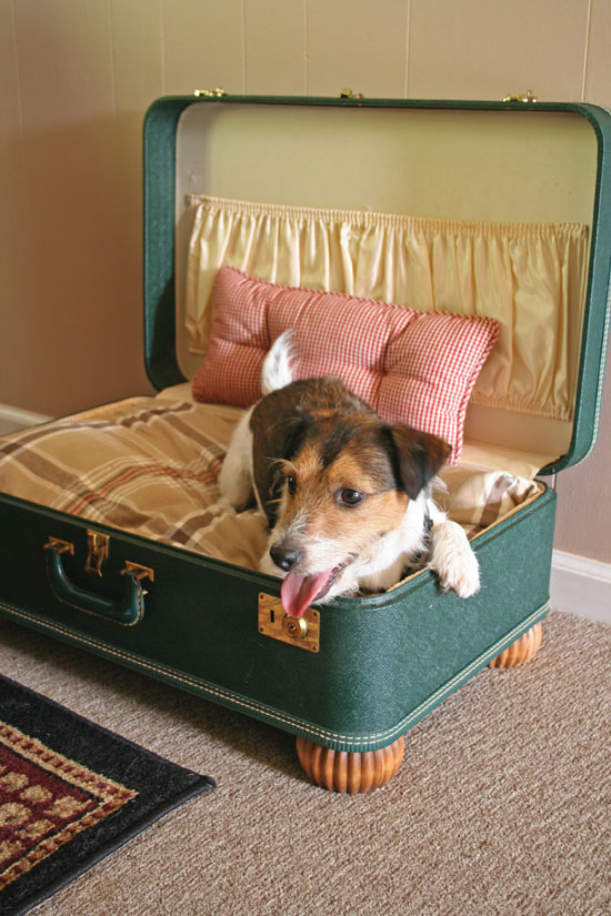 Suitcase Doggy Bed